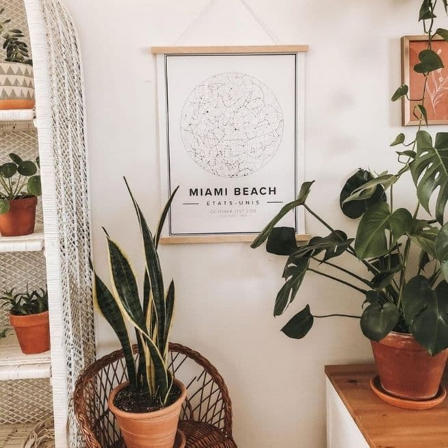 Introduce Peace into Your Interior Style plants