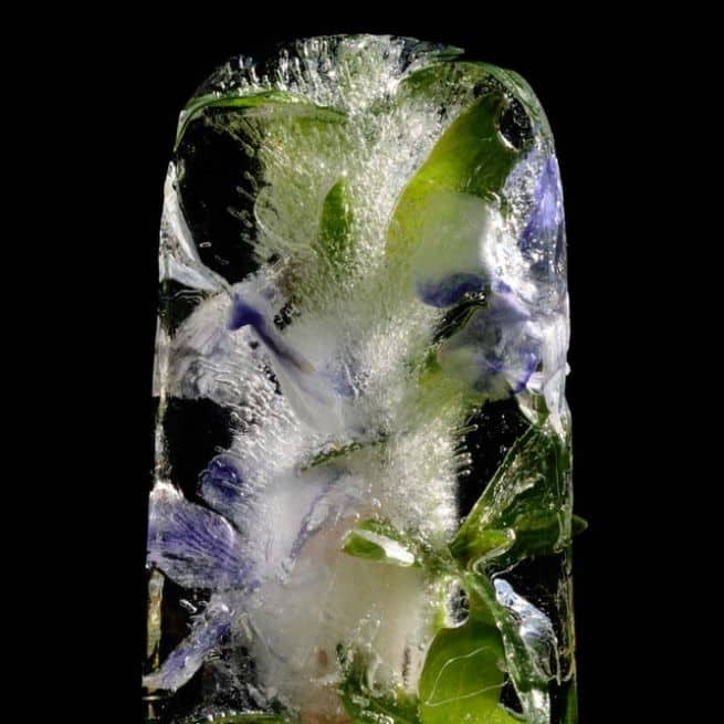 Mother's Day Décor ice cube flowers